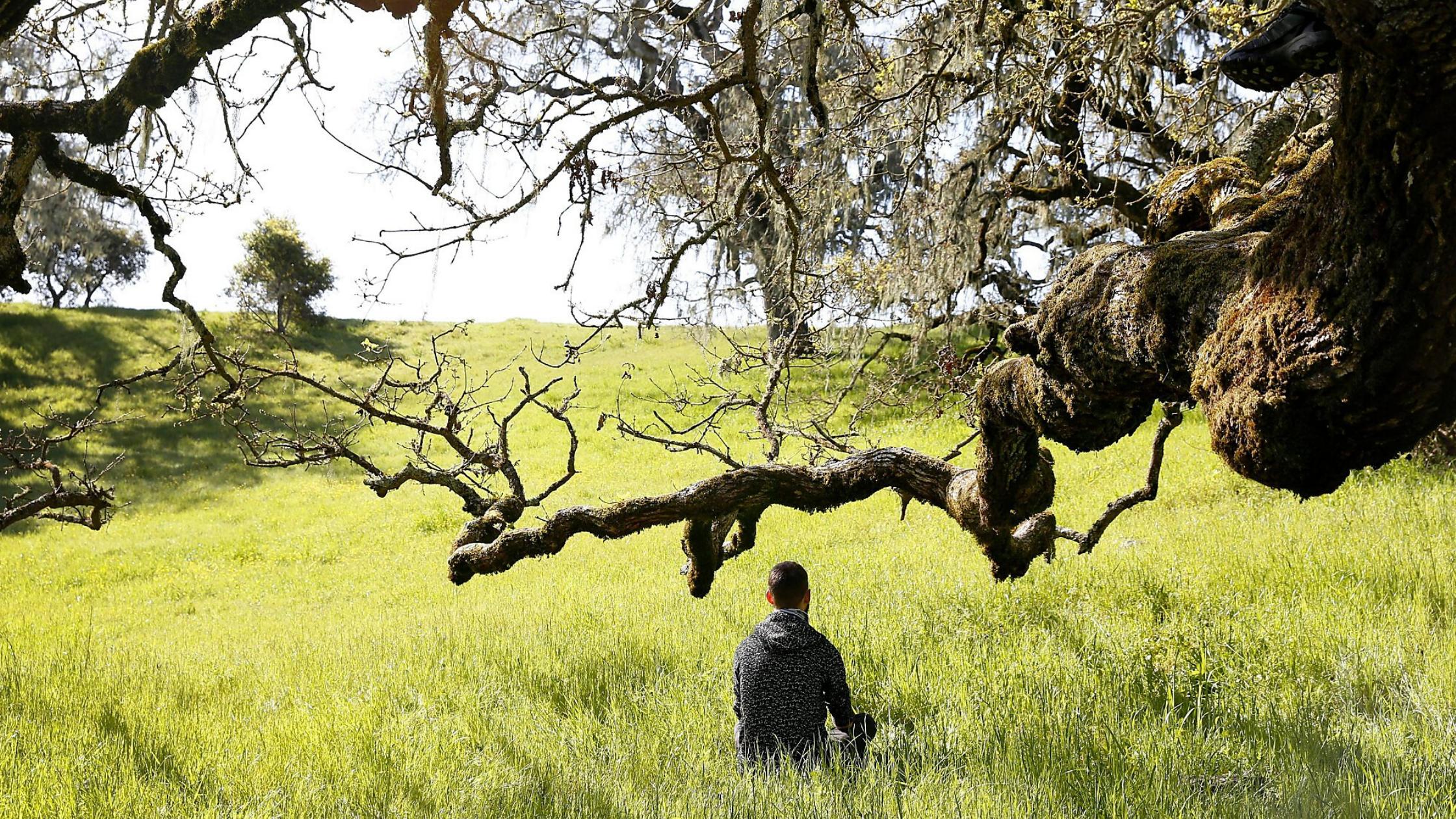 Mi fán terem az erdőfürdőzés